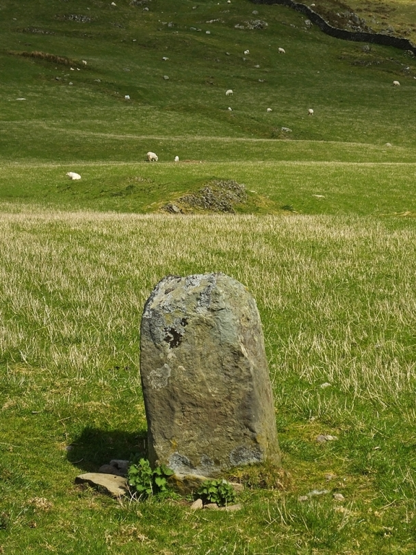 Moel Goedog Stone 1