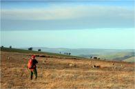 Walijski krajobraz