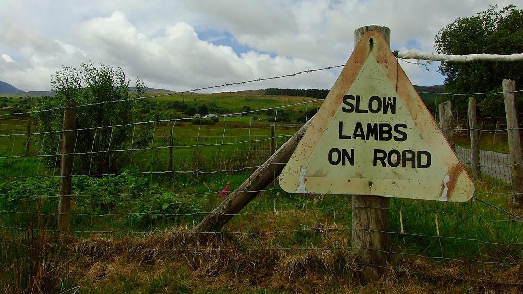 Slow lambs..?