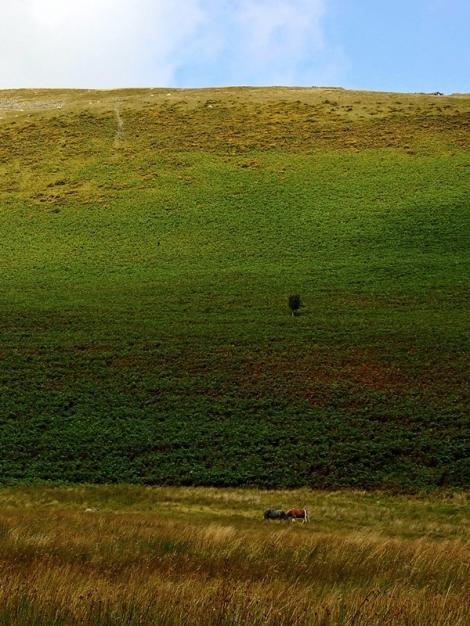 Zielona Pustynia Walijska