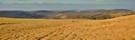 (nie zawsze) Zielona Pustynia Walijska