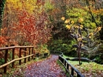 Afan Forest Park na nogach i rowerem