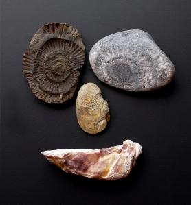 Skamieliny z Glamorgan Heritage Coast