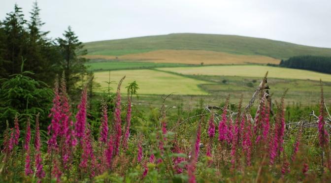 Idealny weekend w Mynydd Preseli / Pembrokeshire