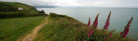 Walia - Wales - Cymru