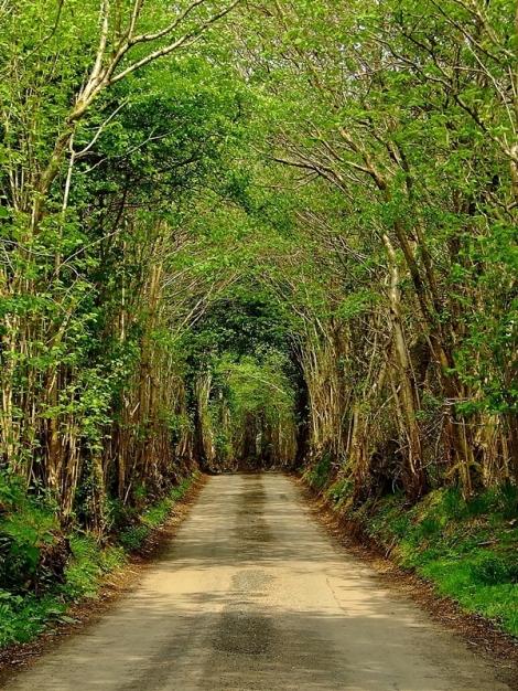 Typowa droga w Czarnych Górach