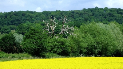 Krajobraz południowego Herefordshire