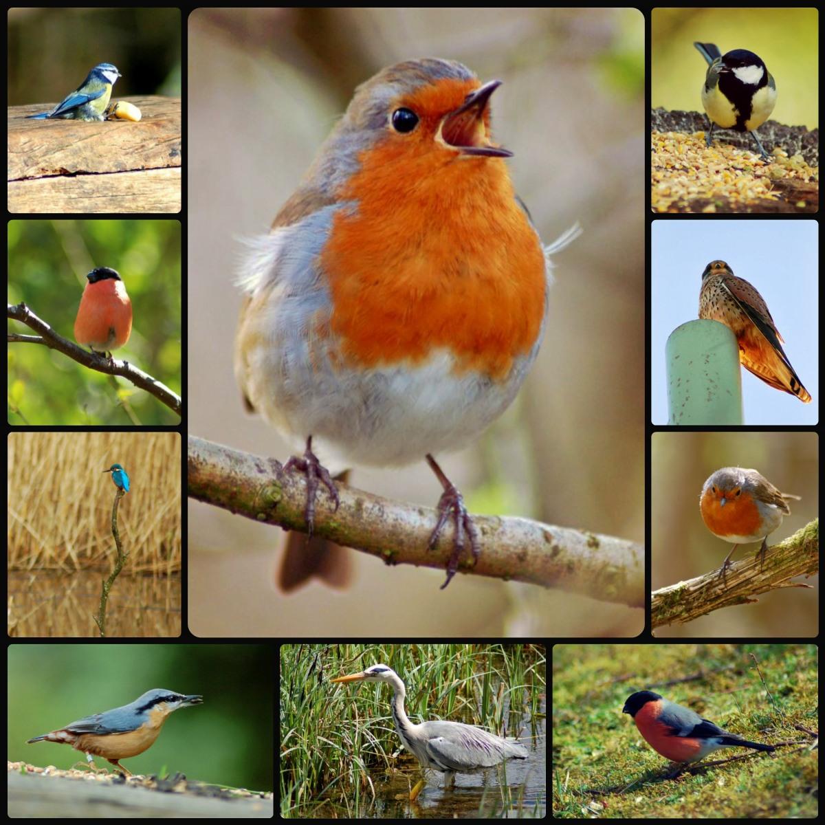 ptaki Walii
