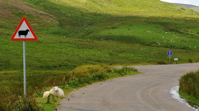 Dolina Claerwen - Uwaga na owce!