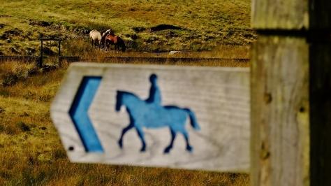 Na zboczach Gór Kambryjskich pasą się konie...